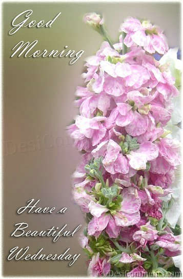 good morning have a beautiful wednesday    wednesday