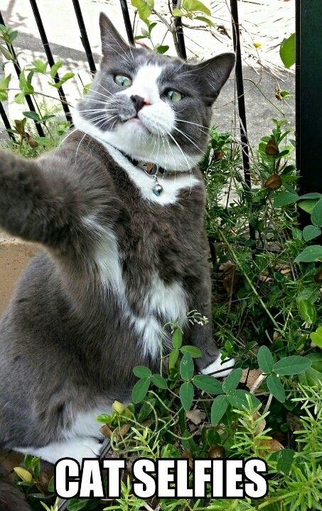 Lol Cat Cat Selfies Funny Myniceprofile Com