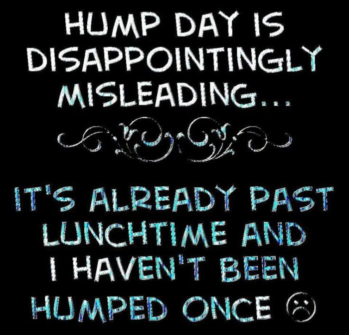 Funny Hump Day Quotes: Hump Day :: MyNiceProfile.com