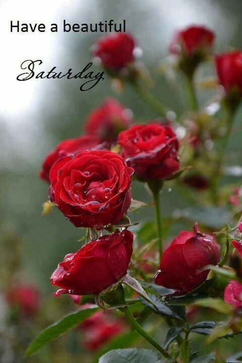 Saturday Comments Pictures