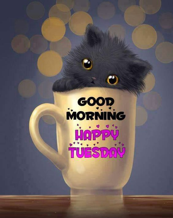 good morning happy tuesday cute kitten in a cup