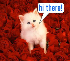 Hi There Kitty Red Roses Hello Myniceprofile Com