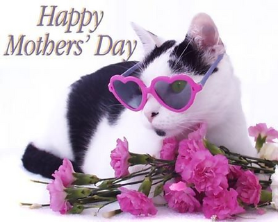 Image result for mothers day cat