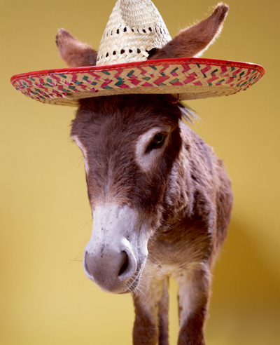 happy cinco de mayo donkey with sambrero cinco de mayo