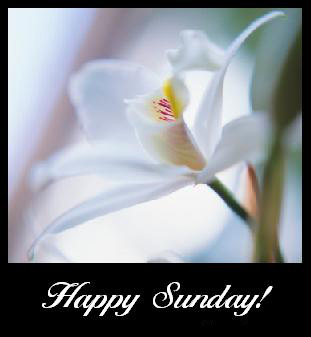 Sunday Comments Pictures