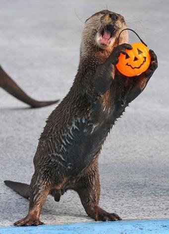 Halloween Otter Halloween Myniceprofile Com