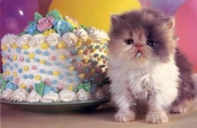 Birthday Kittens Cake Kitten Happy Birthday